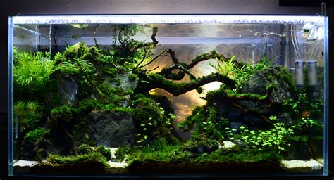 Aquascape Light by Low Tech Shrimp Soon To Be Home To Rcs Low Light