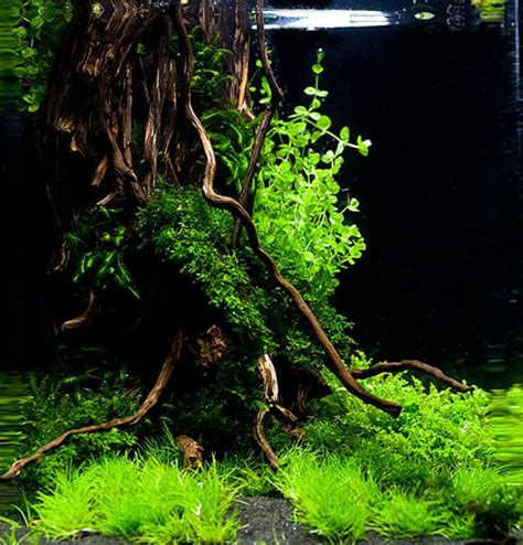 Nano Aquascapes by Nano Aquascaping Suche Flesh Water Aquarium