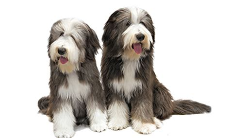 akc names most popular and names in america american kennel club