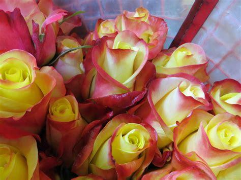 fiori freschi fiori joyflor