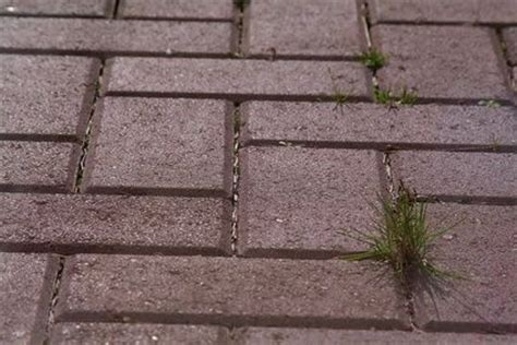 How To Remove Weeds Between Patio Stones by How To Kill Weeds Between Pavers Gardens Bricks And