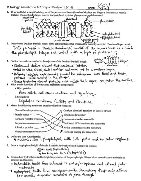 ib cell membrane transport review key