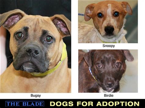 lucas county warden dogs remain available at the lucas county warden s office 410 breeds picture