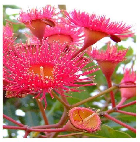 imagenes flores mas bonitas mundo flores mas bellas del mundo im 225 genes de reflexi 243 n para