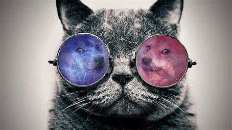 wallpaper cat 3d glasses doge wallpaper hd
