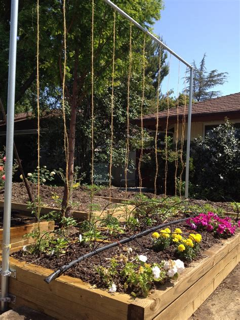 Square Garden Trellis Pin By Lonnquist On Gardening Tips