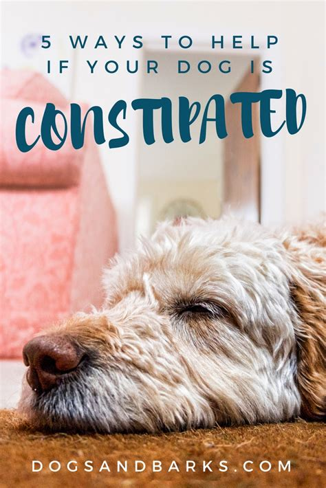is constipated 5 ways to help if your is constipated dogs and bark