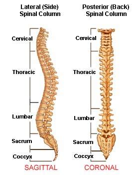 Sections Of Back by Scoliosis Animation Causes Symptoms And Treatments Of