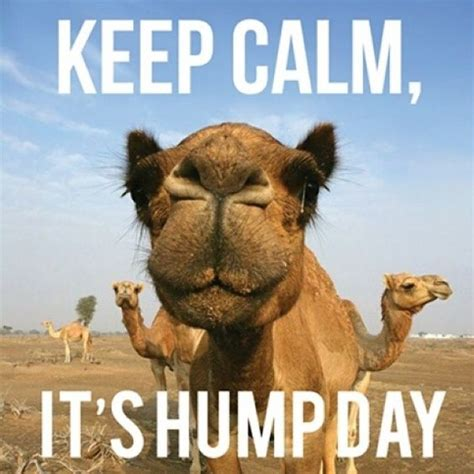 Wednesday Hump Day Meme - keep calm it s humpday quotes quote days of the week
