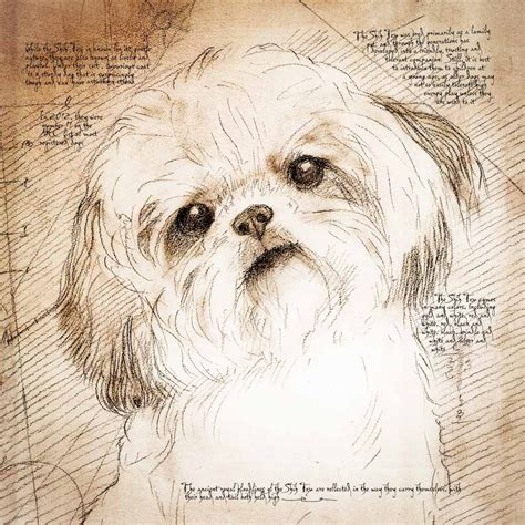how to draw a shih tzu quot shih tzu tilted quot detail of a da vinci style drawing