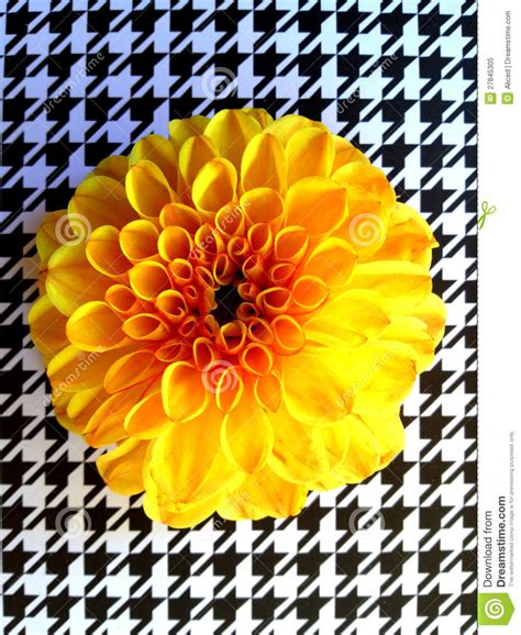 snapseed tutorial white background yellow flower on houndstooth royalty free stock photo