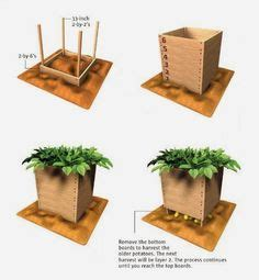 potato planter box 1000 ideas about potato box on grow potatoes