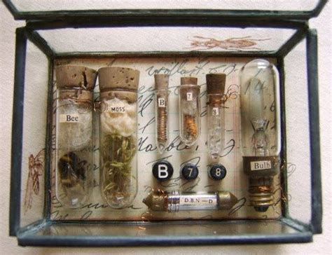 your own cabinet of curiosities 99 best images about create your own cabinet of