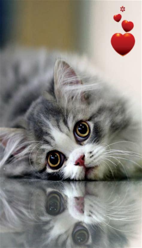 imagenes para fondo de pantalla gatos fondos de pantalla para m 243 vil de gatos imagenes para celular