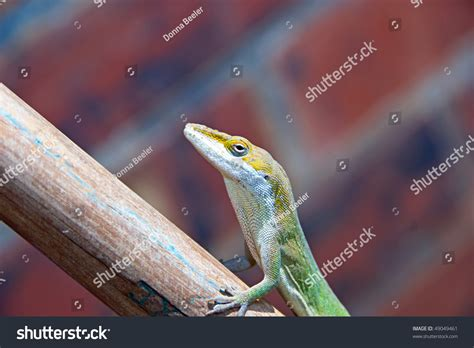 do geckos change color a reptile called a gecko they can change their
