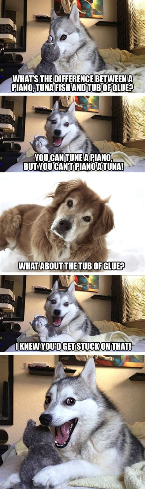 Fat Dog Meme - the gallery for gt bad pun husky