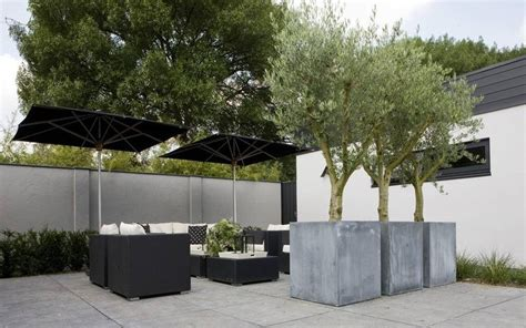 olive trees in large contemporary concrete planters