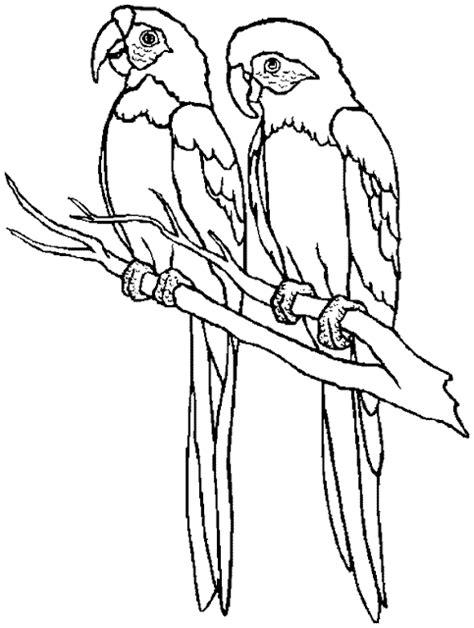 mewarnai gambar hewan burung kakak tua