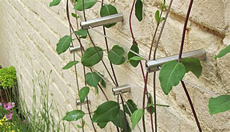 wire for climbing plants green wall extended wire trellis hubs stainless steel