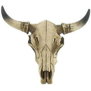 Goat Home Decor by Cow Skull Taxidermy Ebay