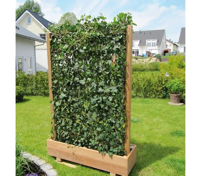 heckenpflanzen immergrün winterhart schnellwachsend 67 hecke am laufenden meter 174 efeu 100 cm dehner garten