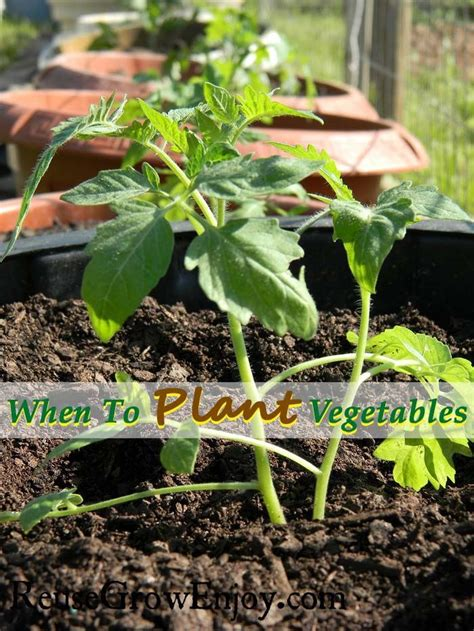 gardening when to plant vegetables 25 best ideas about when to plant vegetables on when to plant garden how to plant