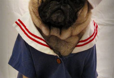 clothes with pugs on pug clothes dress the clothes for your pets