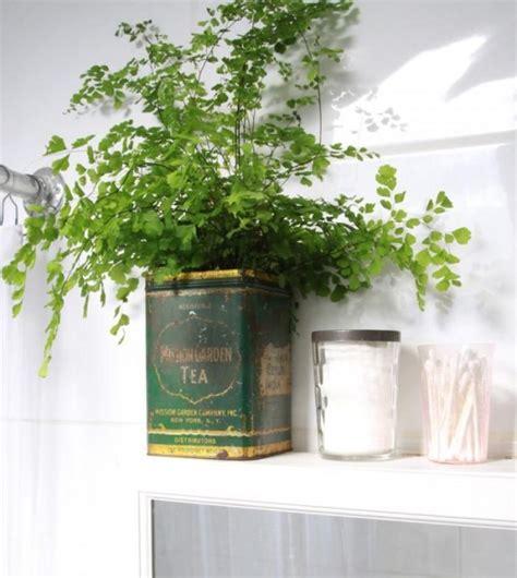 plants good for bathroom piante per arredare il bagno 80 idee