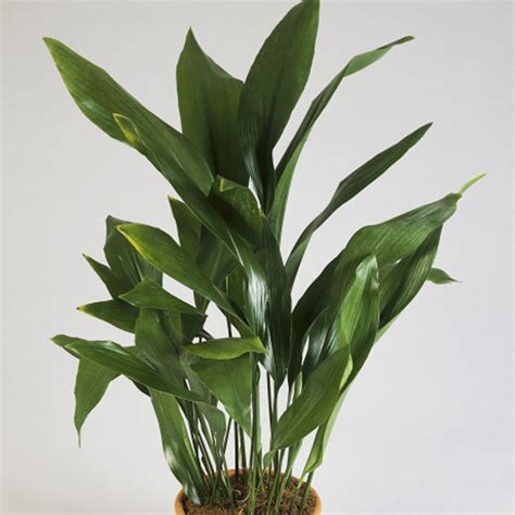 common mexican house plants 10 indestructible houseplants sunset magazine
