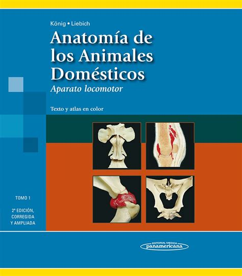 libro anatoma para posturas de anatom 237 a de los animales dom 233 sticos tomo 1 aparato locomotor