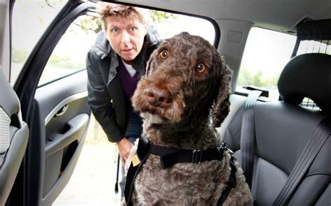 smith s dogs drive review skoda octavia scout 2 0 tdi 4x4