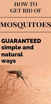 how to get rid of mosquitoes guaranteed simple and