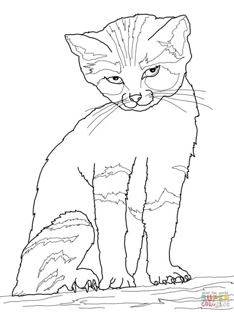 Coloring Page And Cat by Sand Cat Coloring Page Free Printable Coloring Pages
