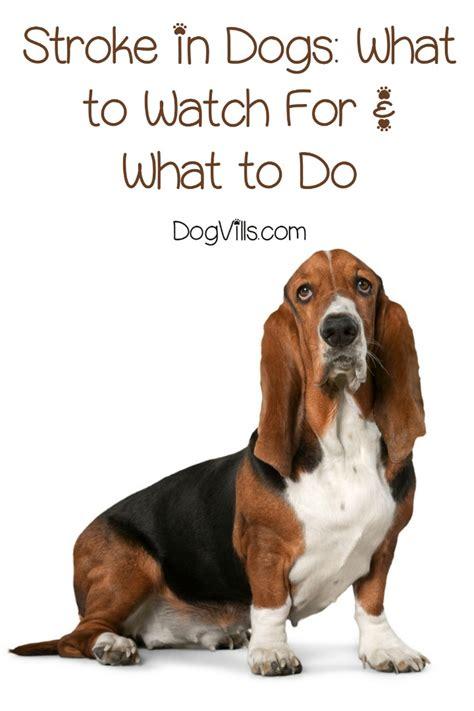 stroke symptoms in dogs signs and symptoms of stroke in dogs