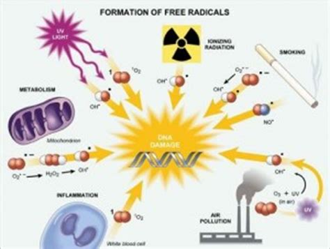 imagenes libres salud radicales libres un peligro para la salud buena salud