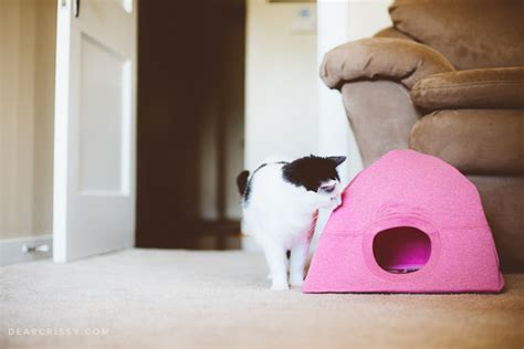 diy cat clothes 15 easy diy cat toys you can make for your today