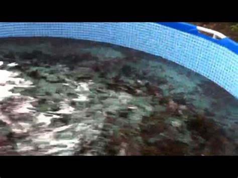 backyard crawfish farming how to build a small scale crawfish farm doovi