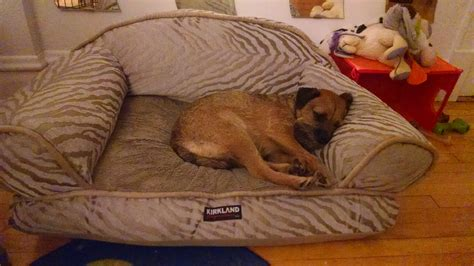 costco dog couch excellent costco dog bed kirkland dog bed memory foam