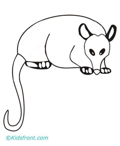 free opossum coloring pages jpg pictures picture to pin on