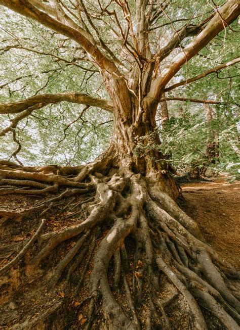 wallpaper  tree roots branches wallpapermaiden