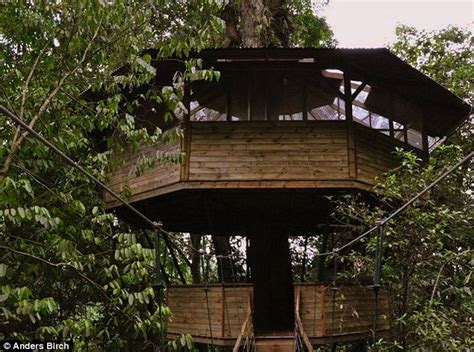 the canopy treehouses stunning photos show how american created a