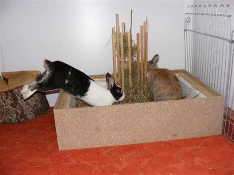 kaninchen in wohnung kaninchen info wohnungsgehege