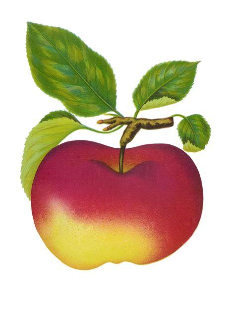 best free apple apple cliparrt clipart best