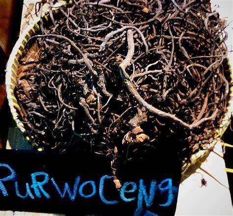 Obat Herbal Untuk Stamina Pria khasiat purwoceng untuk stamina pria dewasa toko herbal