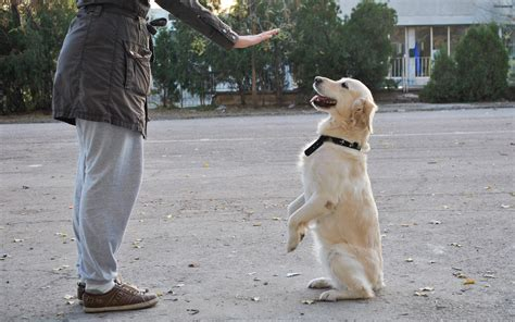 dog trainer  steps wikihow