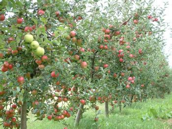 propagating fruit trees the seed of imagination holy ghost evangelical outreach