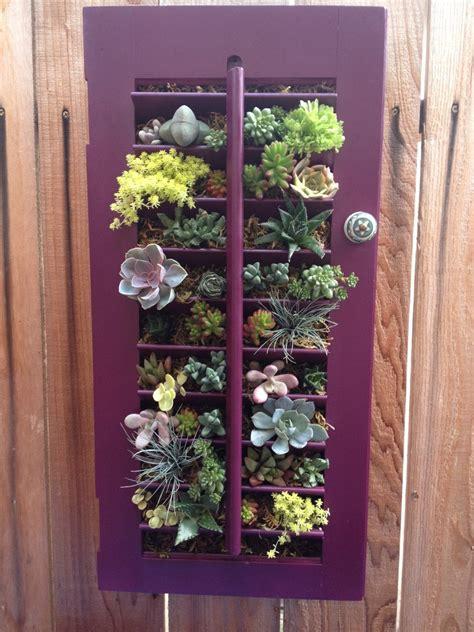 succulent vertical garden  vintage window shutter