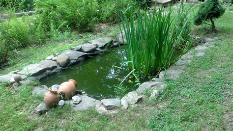 backyard frog pond backyard frog pond frogs are green