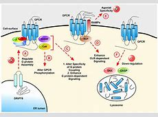 IJMS | Free Full-Text | G Protein-Coupled Receptors: What ... G Protein Coupled Receptors Gpcrs