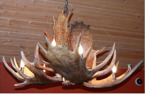 Moose Antler Chandeliers And Lighting Moose Antler Chandelier